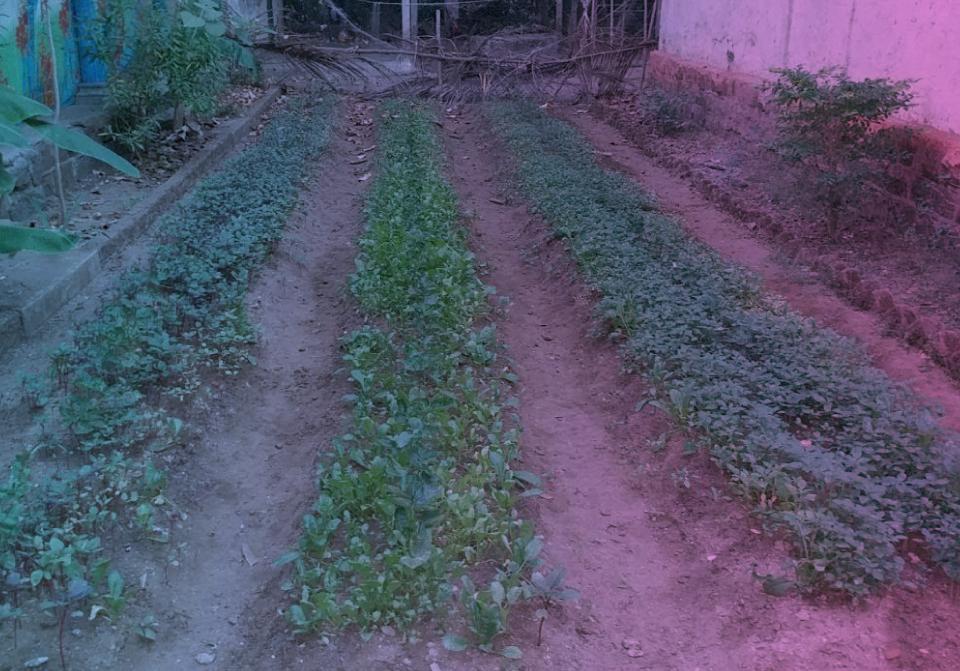 Parasbag Sheti- Kitchen Garden